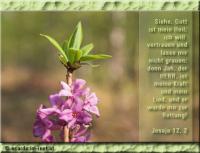 Jesaja 12,2 Siehe, Gott ist mein Heil; ich will vertrauen und lasse mir nicht grauen; denn Jah, der HERR, ist meine Kraft und mein Lied, und er wurde mir zur Rettung!