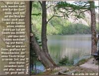 Psalm 1,1-3 Wohl dem, der nicht wandelt nach dem Rat der Gottlosen, noch tritt auf den Weg der Sünder, noch sitzt, wo die Spötter sitzen, sondern seine Lust hat am Gesetz des HERRN und über sein Gesetz nachsinnt Tag und Nacht. Der ist wie ein Baum, gepflanzt an Wasserbächen, der seine Frucht bringt zu seiner Zeit, und seine Blätter verwelken nicht, und alles, was er tut, gerät wohl.
