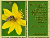 Johannes 10,10 Der Dieb kommt nur, um zu stehlen, zu töten und zu verderben; ich bin gekommen, damit sie das Leben haben und es im Überfluss haben.