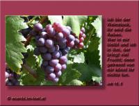 Johannes 15,5 Ich bin der Weinstock, ihr seid die Reben. Wer in mir bleibt und ich in ihm, der bringt viel Frucht; denn getrennt von mir könnt ihr nichts tun.