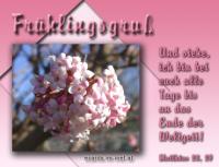 Frühlingsgruß Matthäus 28, 20 Und siehe, ich bin bei euch alle Tage bis an das Ende der Weltzeit!