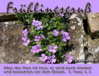 Frühlingsgruß 2. Thessalonicher 3, 3 Aber der Herr ist treu; er wird euch stärken und bewahren vor dem Bösen.