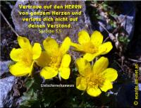 Sprüche 3,5 Vertraue auf den HERRN von ganzem Herzen und verlass dich nicht auf deinen Verstand.