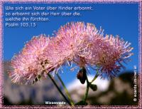 Psalm 103,13 Wie sich ein Vater über Kinder erbarmt, so erbarmt sich der HERR über die, welche ihn fürchten.