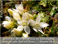 Psalm 33,4 Denn das Wort des HERRN ist wahrhaftig, und all sein Tun ist Treue.