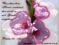 Psalm 32,10b  ... wer aber dem HERRN vertraut, den wird er mit Gnade umgeben.