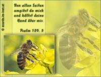 Psalm 139,5 Von allen Seiten umgibst du mich und hältst deine Hand über mir.