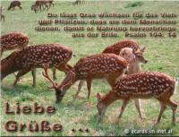 Psalm 104,14 Du lässt Gras wachsen für das Vieh und Pflanzen, dass sie dem Menschen dienen, damit er Nahrung hervorbringe aus der Erde.