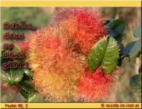 Schön, dass es dich gibt! Psalm 96,2 Singt dem HERRN, preist seinen Namen, verkündigt Tag für Tag sein Heil!