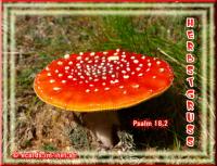 Herbstgruss Psalm 18,2  Ich will dich von Herzen lieben, o HERR, meine Stärke!