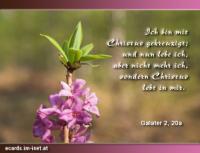 Galater 2,20 Ich bin mit Christus gekreuzigt; und nun lebe ich, aber nicht mehr ich [selbst], sondern Christus lebt in mir. Was ich aber jetzt im Fleisch lebe, das lebe ich im Glauben an den Sohn Gottes, der mich geliebt und sich selbst für mich hingegeben hat.